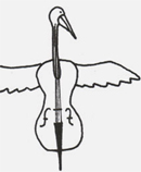 pelican cello, pelican cello...